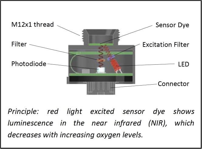 個体酸素センサーの仕組み
