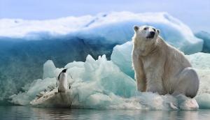 海の色が変わっていくことに対して、ペンギンとホッキョクグマは同意するか