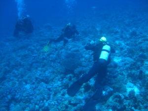エジプト・紅海ツアー(レッドシーツアー)の研究(その6)ダイビングスポット:ティラン島エリア