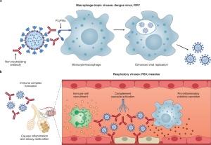 変異種:抗体依存性感染増強:ADEへの懸念は合理的だがしっかりと監視されているハズ?